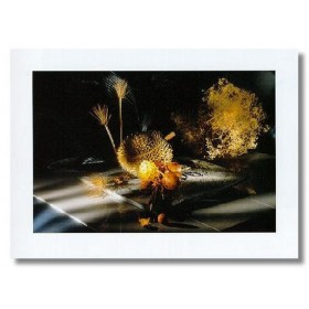 ΛΟΥΛΟΥΔΙΑ - 60x80 cm